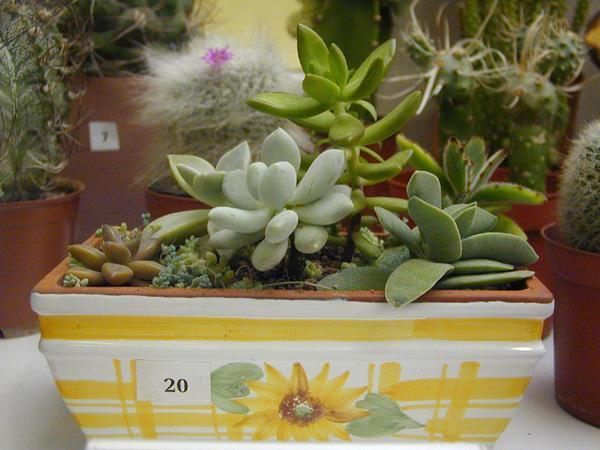 Выставка кактусов и суккулентов